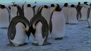 Penguins1