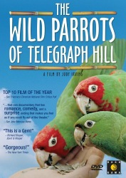 wildparrots_cover